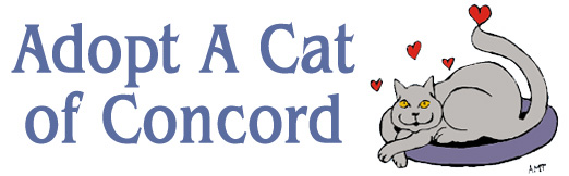 Adopt a Cat of Concord Massachusetts